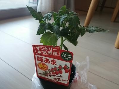 本気野菜トマト