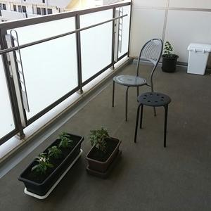 プランター花壇