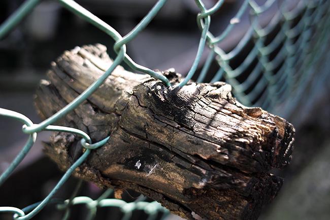 柵に食いこんで後先を切られたあげく取り残された木片