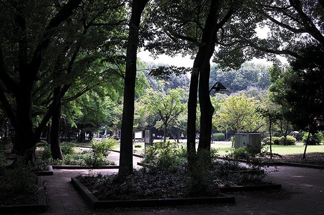 上野公園の木々
