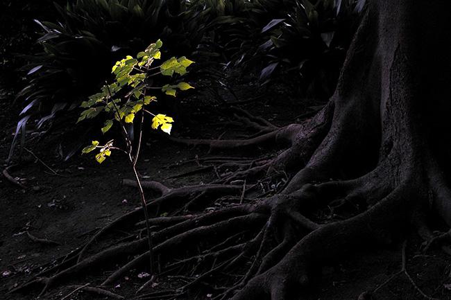 上野公園の木