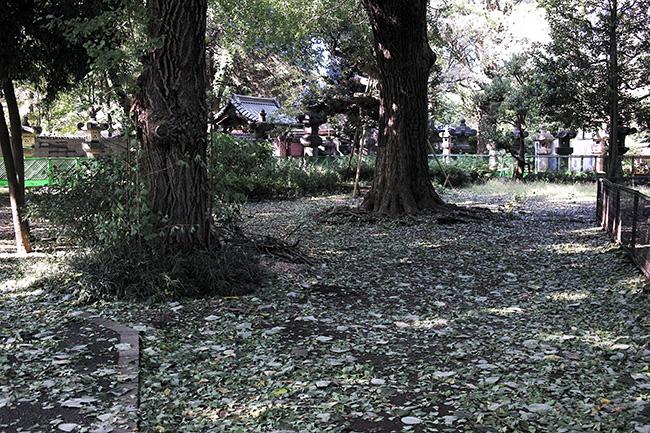 台風一過の上野公園/東照宮前