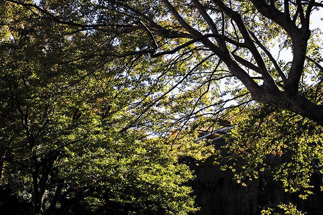 水上音楽堂の後ろの出入り口付近の木々