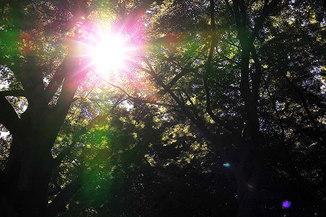 木々に太陽