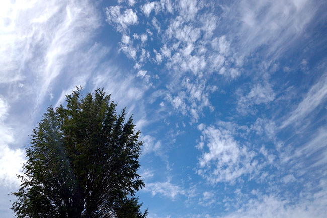 空に雲と木