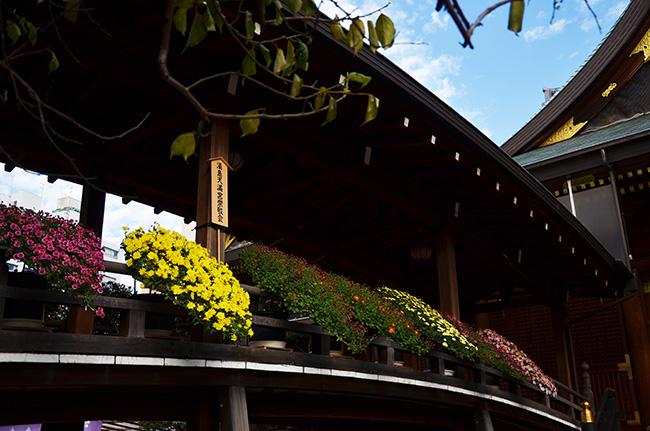 湯島天神菊まつり