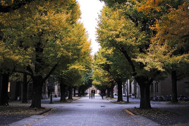 東大の銀杏並木