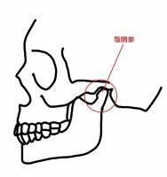 顎関節全容