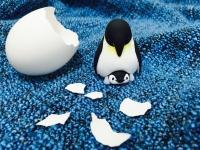 皇帝ペンギン 親子
