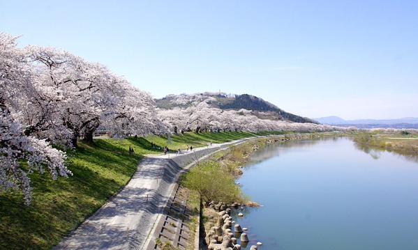 白石川堤一目千本桜2014