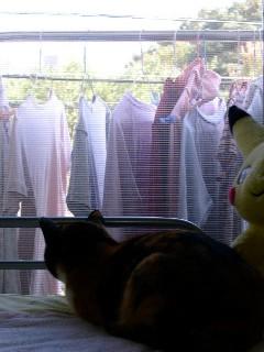 ローズと洗濯物