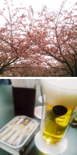 桜,サッポロ黒ラベル「パーフェクトデイズ2016」