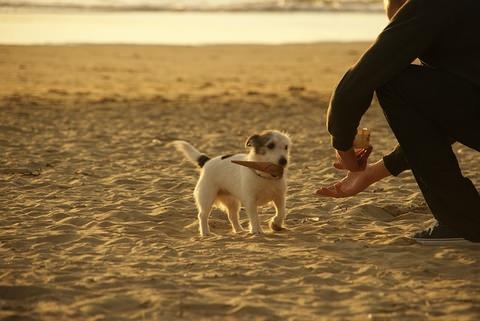 子犬と遊ぶ