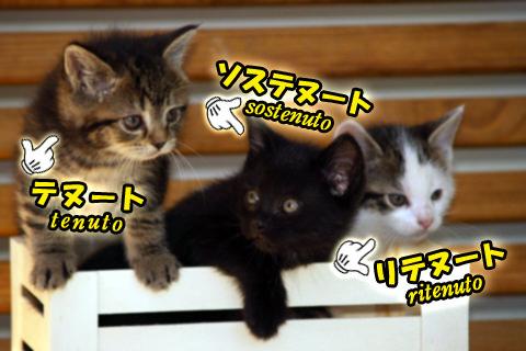 テヌート、ソステヌート、リテヌートという名の三匹の猫の写真