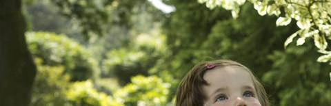 木を見上げている女の子の写真