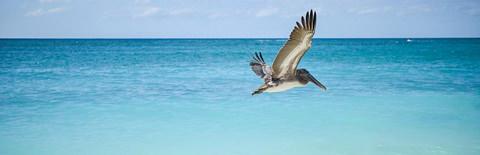 海原を飛ぶ海鳥の写真