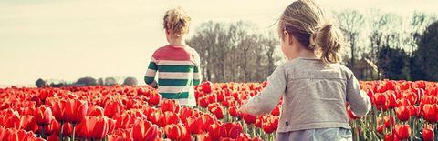 チューリップ畑を順に歩く二人の女の子の写真