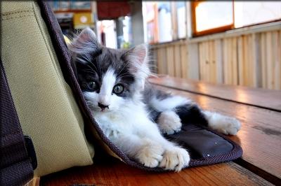 可愛いネコ