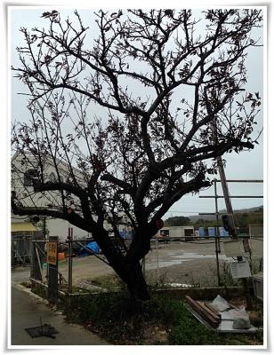 台風19号の被害・・・