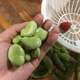 そら豆さん。