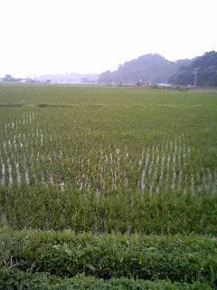 ぐんまの田園