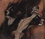 三頭で尾が蛇のケルベロス