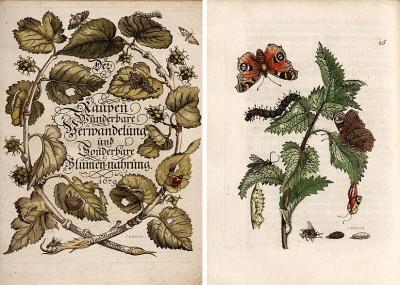 Maria Sibylla Merian. Der Raupen Wunderbare Verwandelung und Sonderbare Blumen-Nahrung 1679