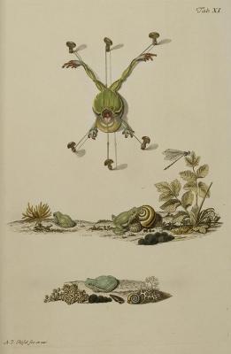 Historia Natvralis Ranarvm Nostrativm by  August Johann Rosel von Rosenhof