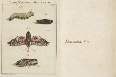 Insecten-Belustigung (Band 1) by August Johann Rosel von Rosenhof