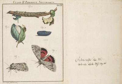 Insecten-Belustigung (Band 1) by August Johann Rosel von Rosenhof