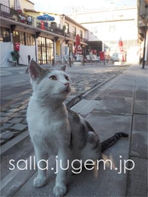 cat-7.jpg