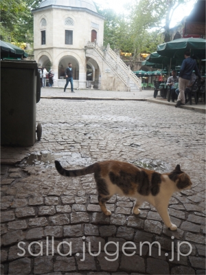 cat-12.jpg