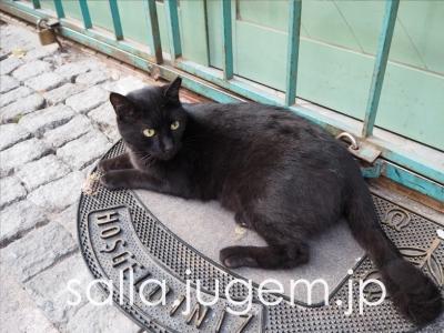 cat-16.jpg