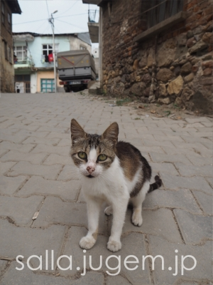 cat-17.jpg