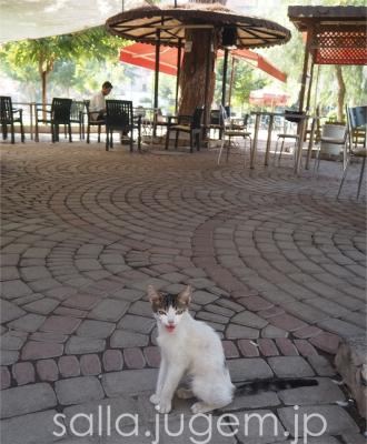 cat-20.jpg