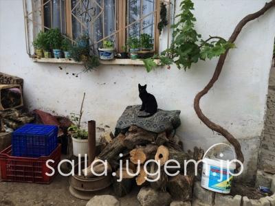 cat-22.jpg