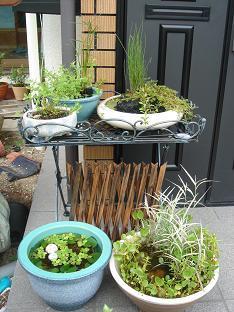 水生植物1