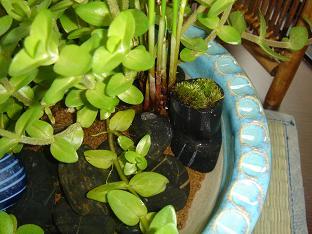 水生植物7