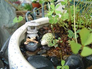 水生植物8