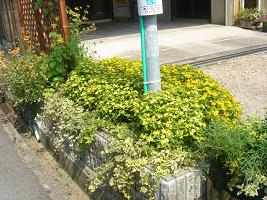 夏花壇06−3