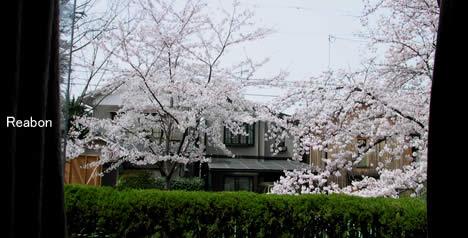 桜の見えるレストラン