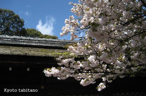 平野神社 白雲神社