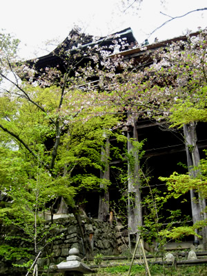 清水寺の桜