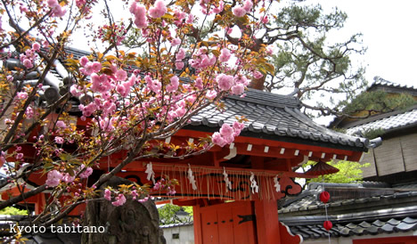 八坂庚申堂の桜