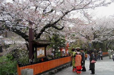 祇園白川 京都