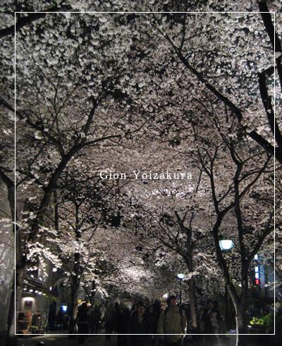 祇園 宵桜