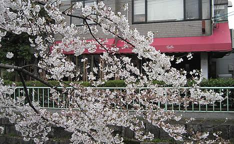 桜の見えるレストラン リーボン