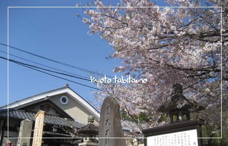 三年坂 桜