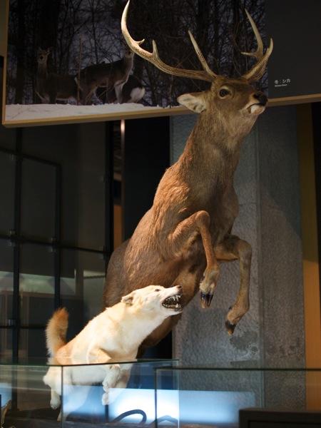 シカとオオカミ