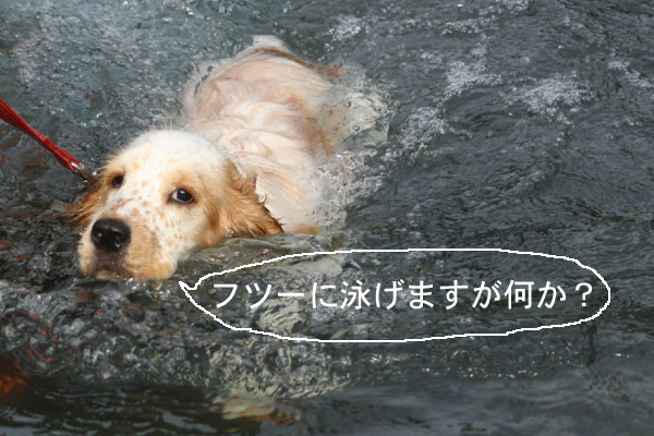 川で泳ぐ杏